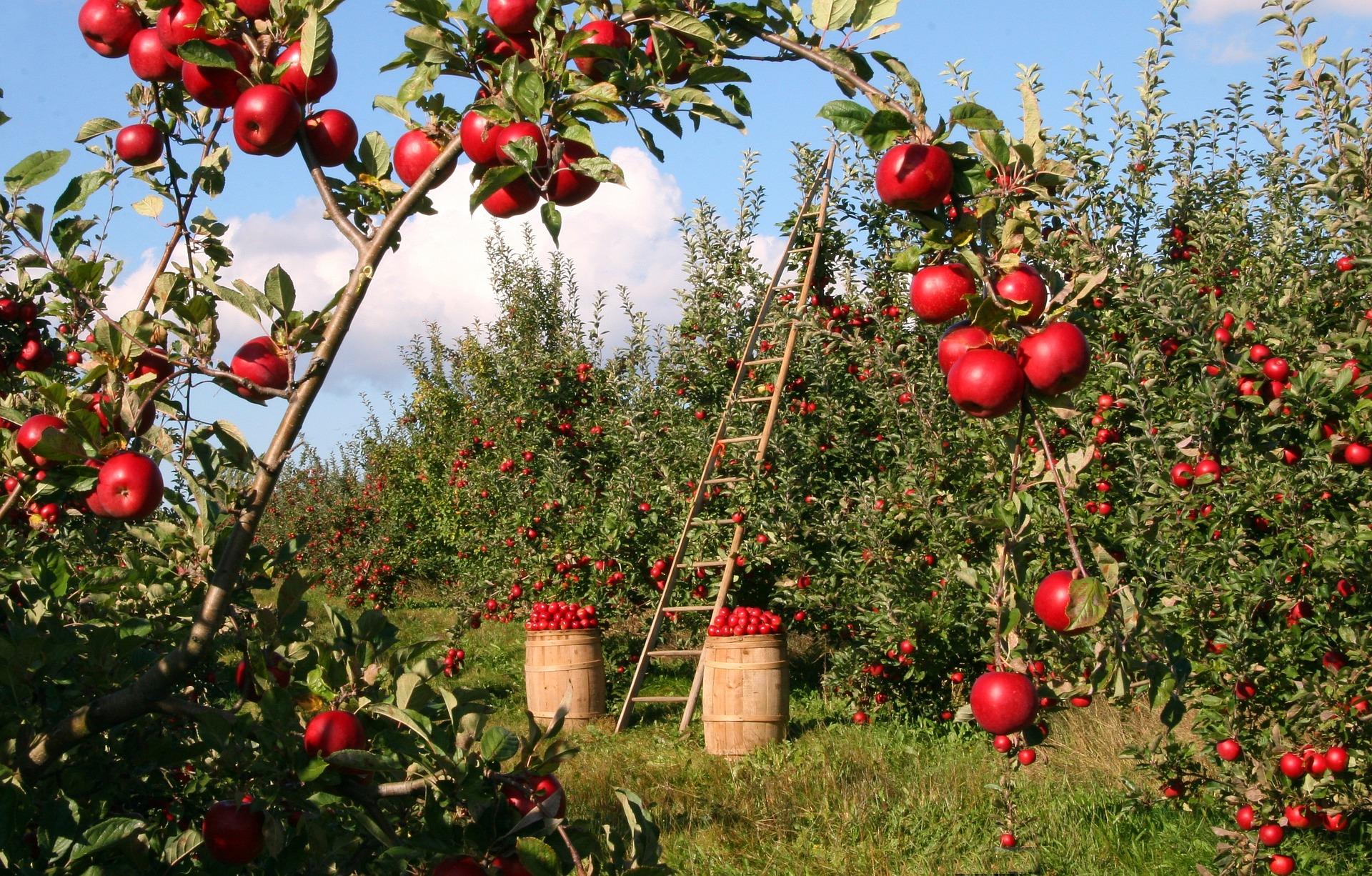 The Apple Orchard, Wisdom Stratum